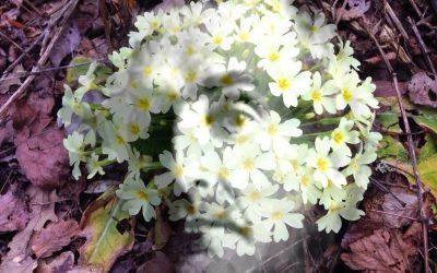 Risveglio di Primavera